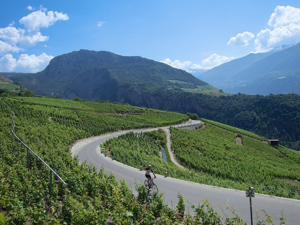 Curvy vineyard climb