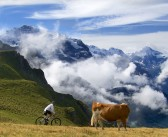 "2015 ""Cycling the Alps"" Calendars"
