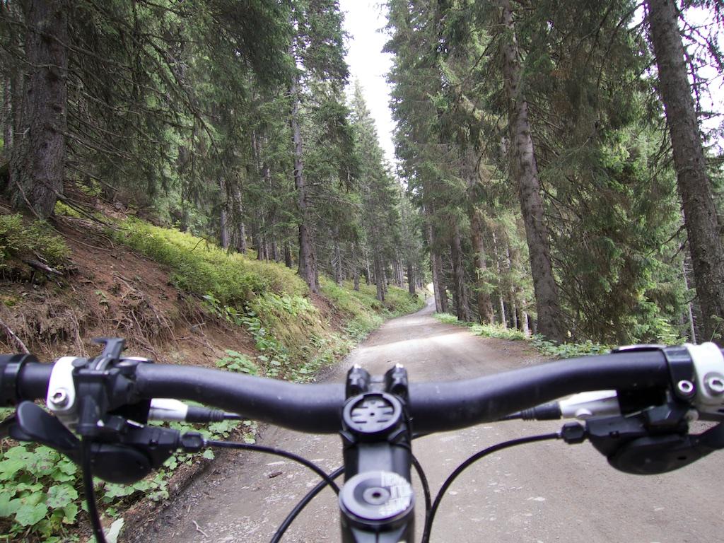 Early road still below tree line