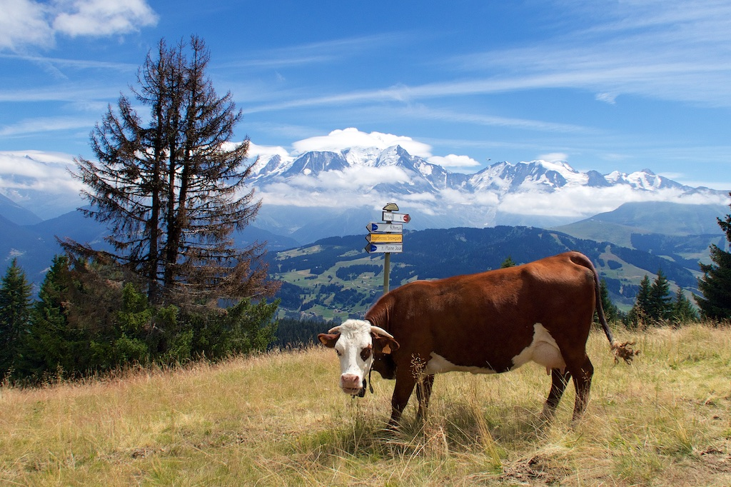 Moo with a View