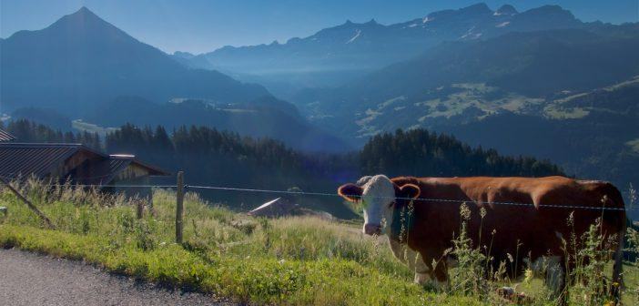 """""""Ride the Alps Vaudoises"""""""